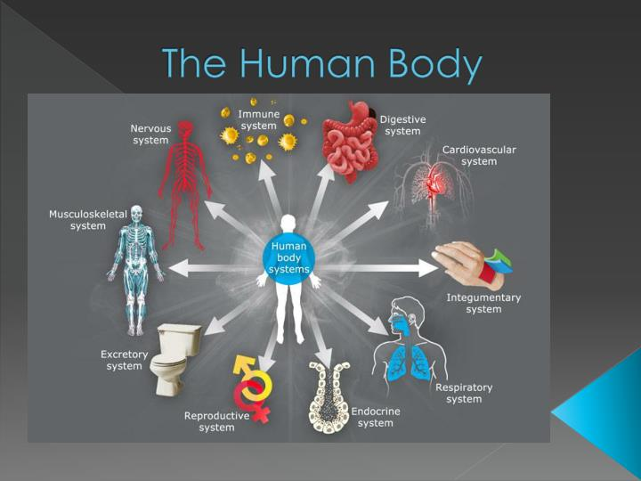 the effects of physical exercise on the human body Human body exercise related questions how many bones are in the human body what is the physics behind physiological activities of human body.