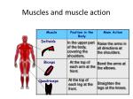muscles and muscle action1