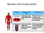 muscles and muscle action2