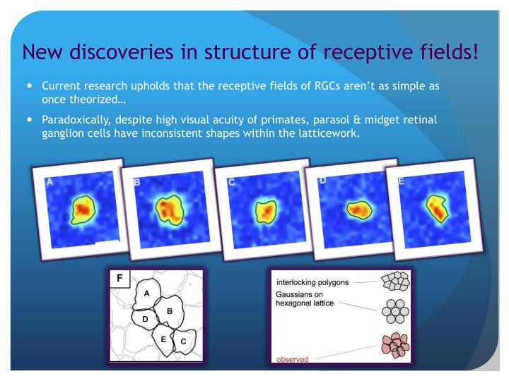 New discoveries in structure of receptive fields!