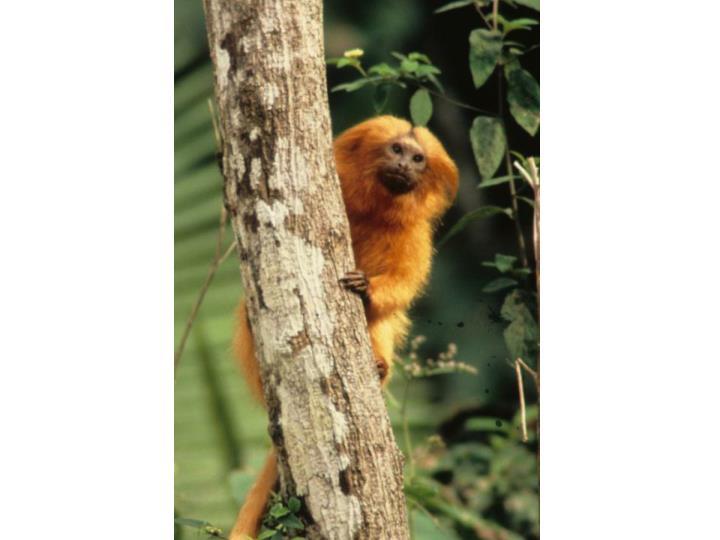 Biodiversity conservation the gef
