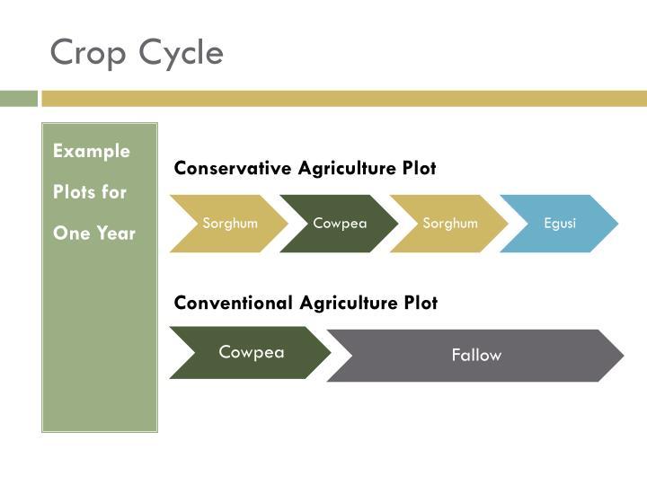 Crop Cycle