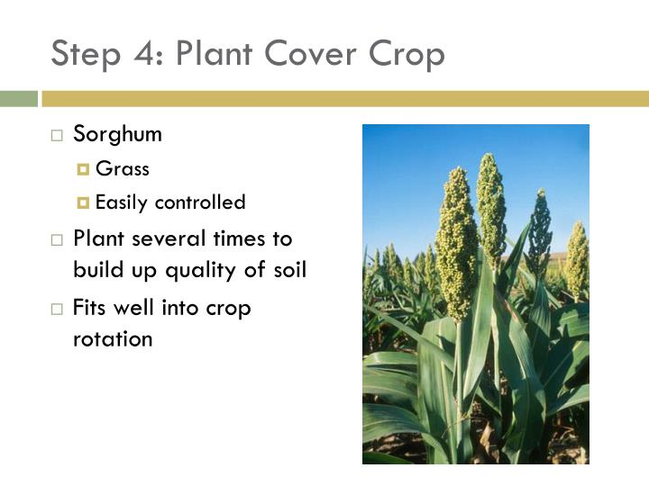 Step 4: Plant Cover Crop