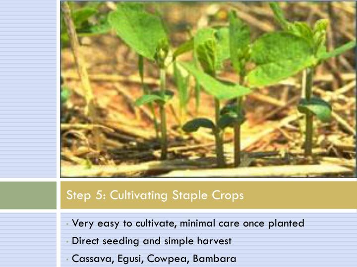 Step 5: Cultivating Staple Crops