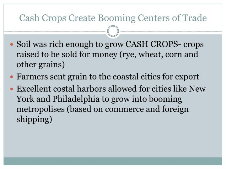 Cash crops create booming centers of trade