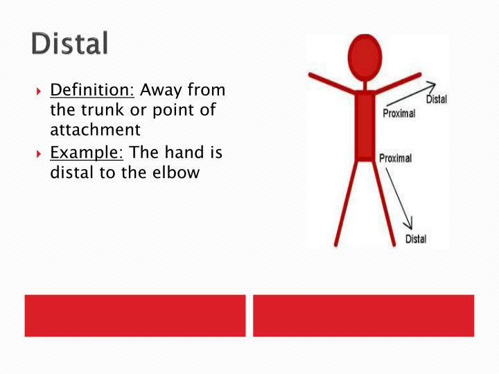 PPT - Anatomical Planes and Directions PowerPoint Presentation - ID ...
