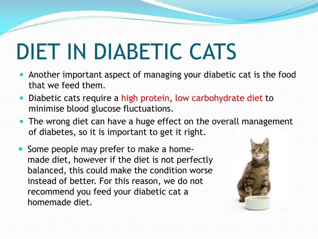 PPT - HOW TO MANAGE YOUR DIABETIC CAT
