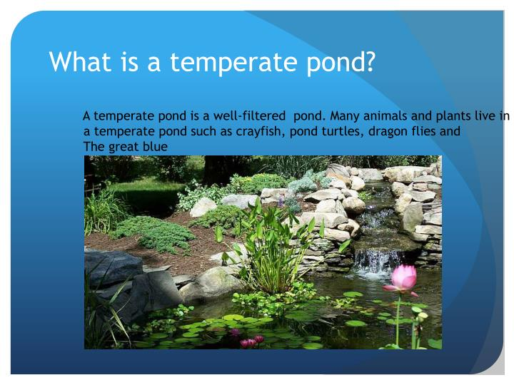 What is a temperate pond
