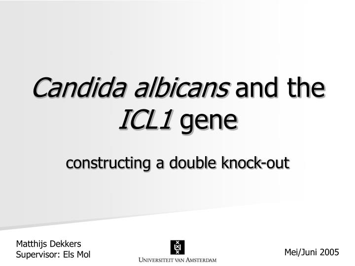 Candida albicans and the icl1 gene
