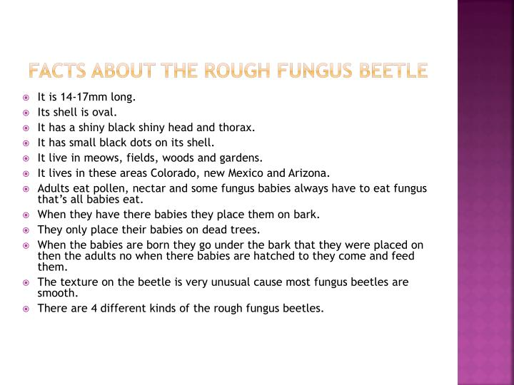 Facts about the rough fungus beetle