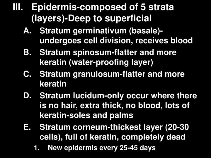 Epidermis-composed of 5 strata (layers)-Deep to superficial