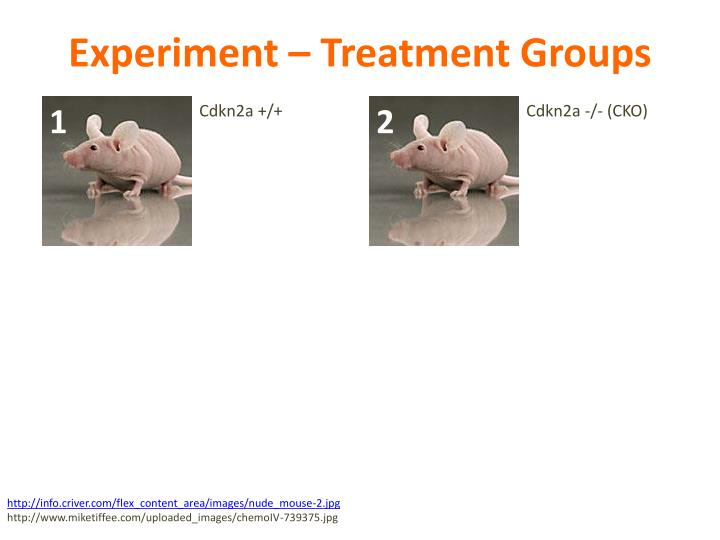 Experiment – Treatment Groups
