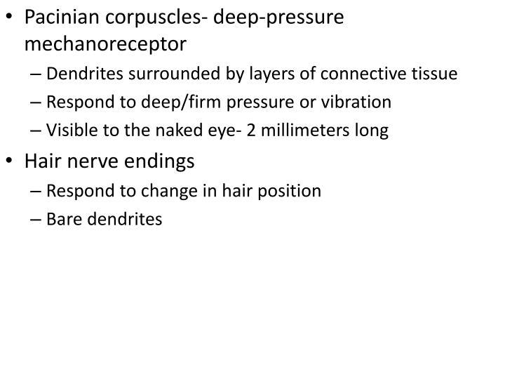 Pacinian corpuscles- deep-pressure mechanoreceptor