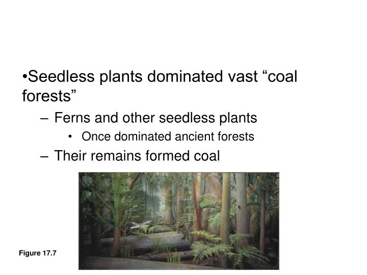 """Seedless plants dominated vast """"coal forests"""""""