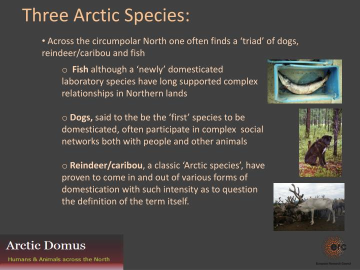 Across the circumpolar North one often finds a 'triad' of dogs, reindeer/caribou and fish