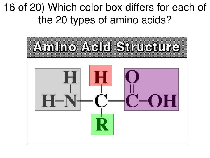 16 of 20) Which color box differs for each of the 20 types of amino acids?