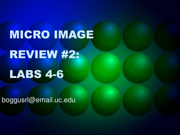 micro image review 2 labs 4 6 n.