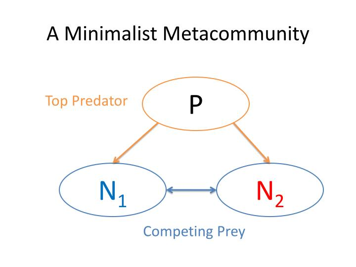 A Minimalist Metacommunity