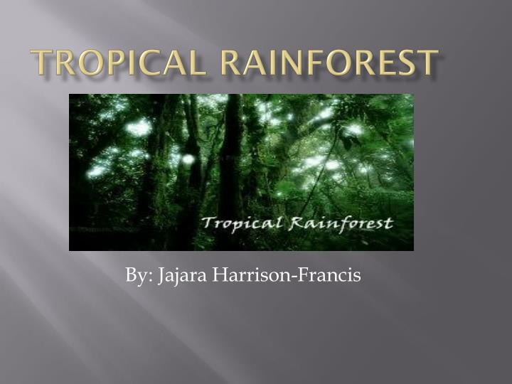 ppt tropical rainforest powerpoint presentation id 2690479