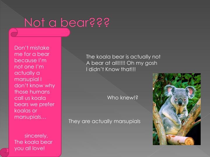 Not a bear???