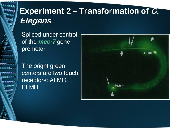 Experiment 2 – Transformation of