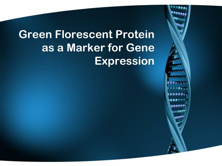 Green florescent protein as a marker for gene expression