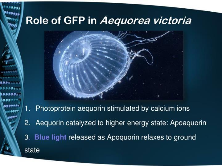 Role of gfp in aequorea victoria