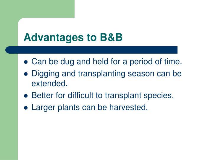 Advantages to B&B