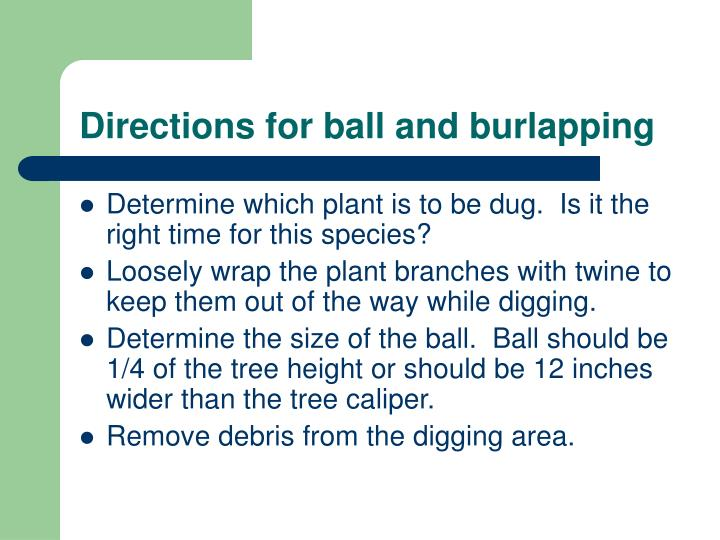 Directions for ball and burlapping