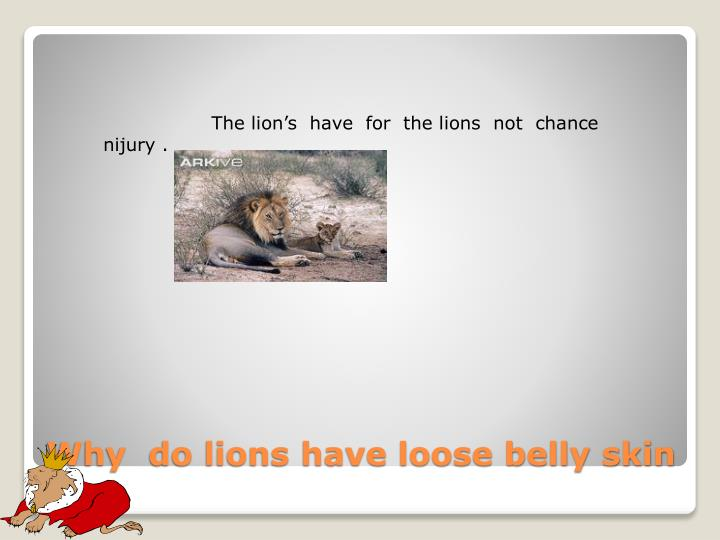Why do lions have loose belly skin