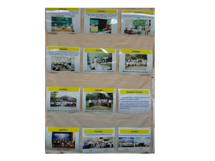 Thazin nwe mango export consortia formation
