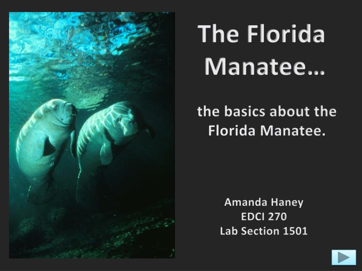 manatee research paper Society term papers (paper 12939) the free society research paper further developments in manatee research will help in preventing the.