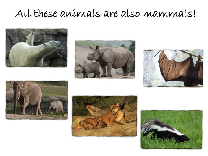 All these animals are also mammals!