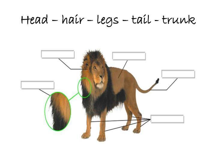 Head – hair – legs – tail - trunk