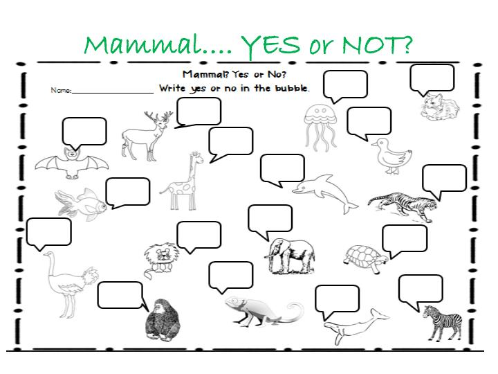 Mammal…. YES or NOT?