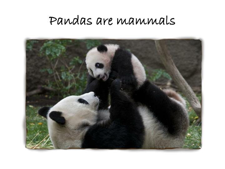 Pandas are mammals