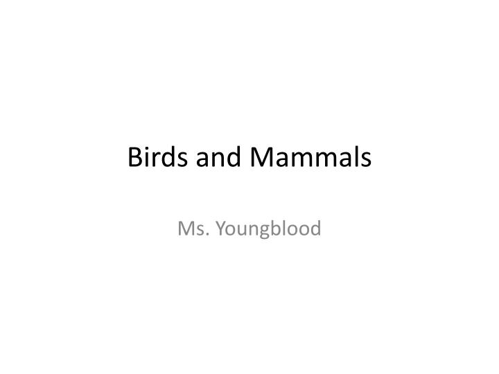 birds and mammals n.