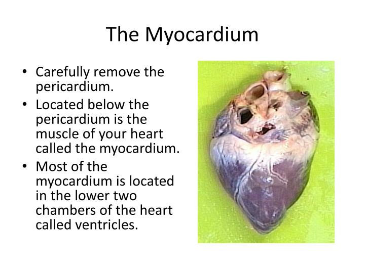 an exploration and dissection of a mammalian heart Using dissection techniques (relates to pag2) to look at both the internal and external structure of the mammalian heart ('heart dissection' activity) is always well received by students and, when used in association with visual images of the heart, allows for consolidation and enhancement of existing knowledge.