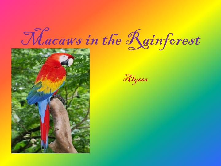 macaws in the rainforest n.