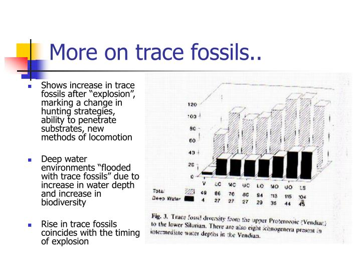 """Shows increase in trace fossils after """"explosion"""", marking a change in hunting strategies, ability to penetrate substrates, new methods of locomotion"""