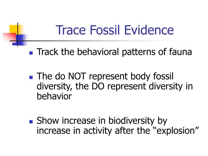 Trace Fossil Evidence