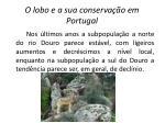 o lobo e a sua conserva o em portugal4