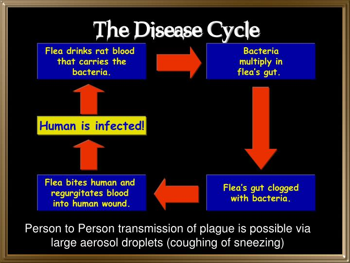 The Disease Cycle