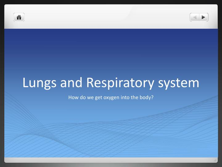 lungs and respiratory system n.