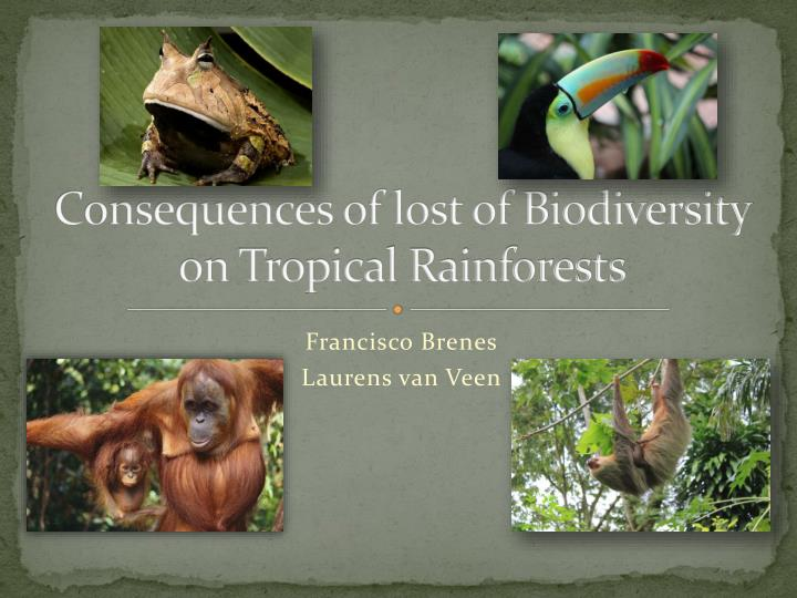 consequences of lost of biodiversity on tropical rainforests n.