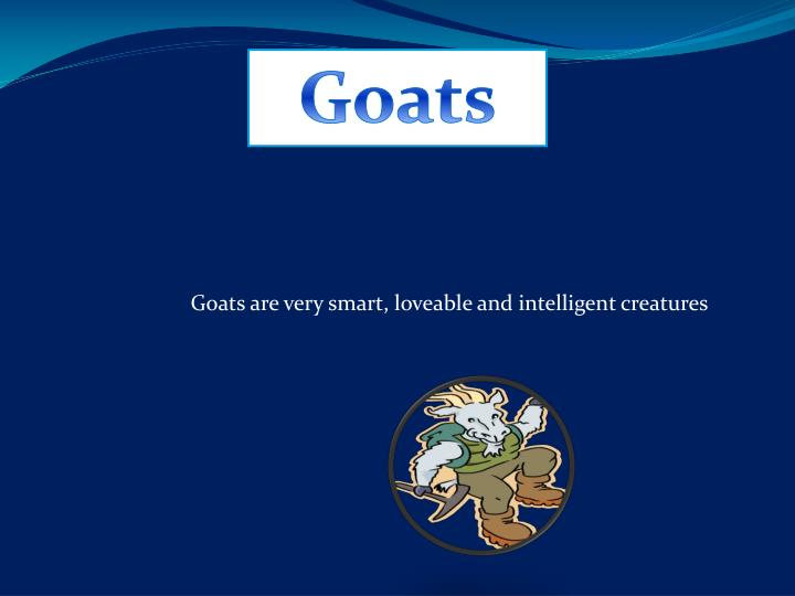 goats are very smart loveable and intelligent creatures n.