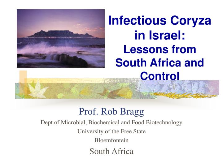 infectious coryza in israel lessons from south africa and control n.
