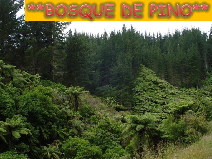 **BOSQUE DE PINO**
