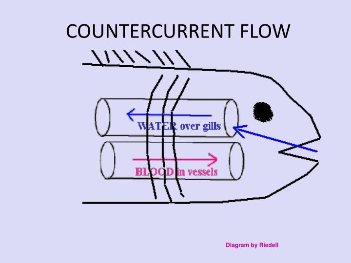 COUNTERCURRENT FLOW