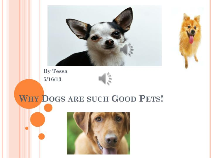 why dogs are such good pets n.